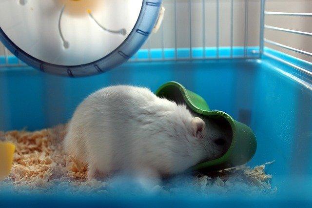 Napáječky pro zvířata versus misky s vodou